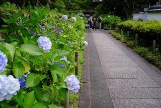 桜門側の小道