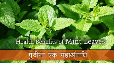 पुदीना महाऔषधि ,Peppermint Benefits in Hindi, Health Benefit Of Peppermint, पुदीने के फायदे , पुदीना , पेपरमिंट, पुदीना औषधि , pudina aushadhi, peppermint ke fayde, pudina ke fayde, Benefits Of Mint, mint health benefits, Mint nutrition