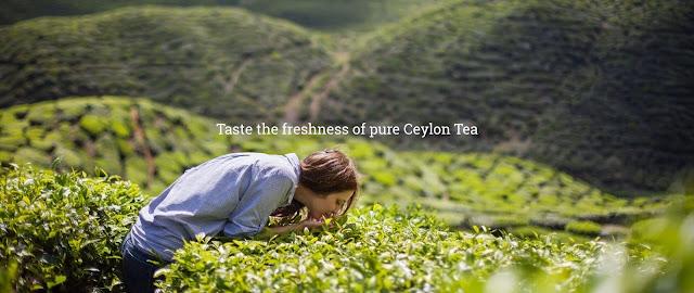 Zesta Pure Ceylon srilanka Tea BOPF Black Tea 100 Bags