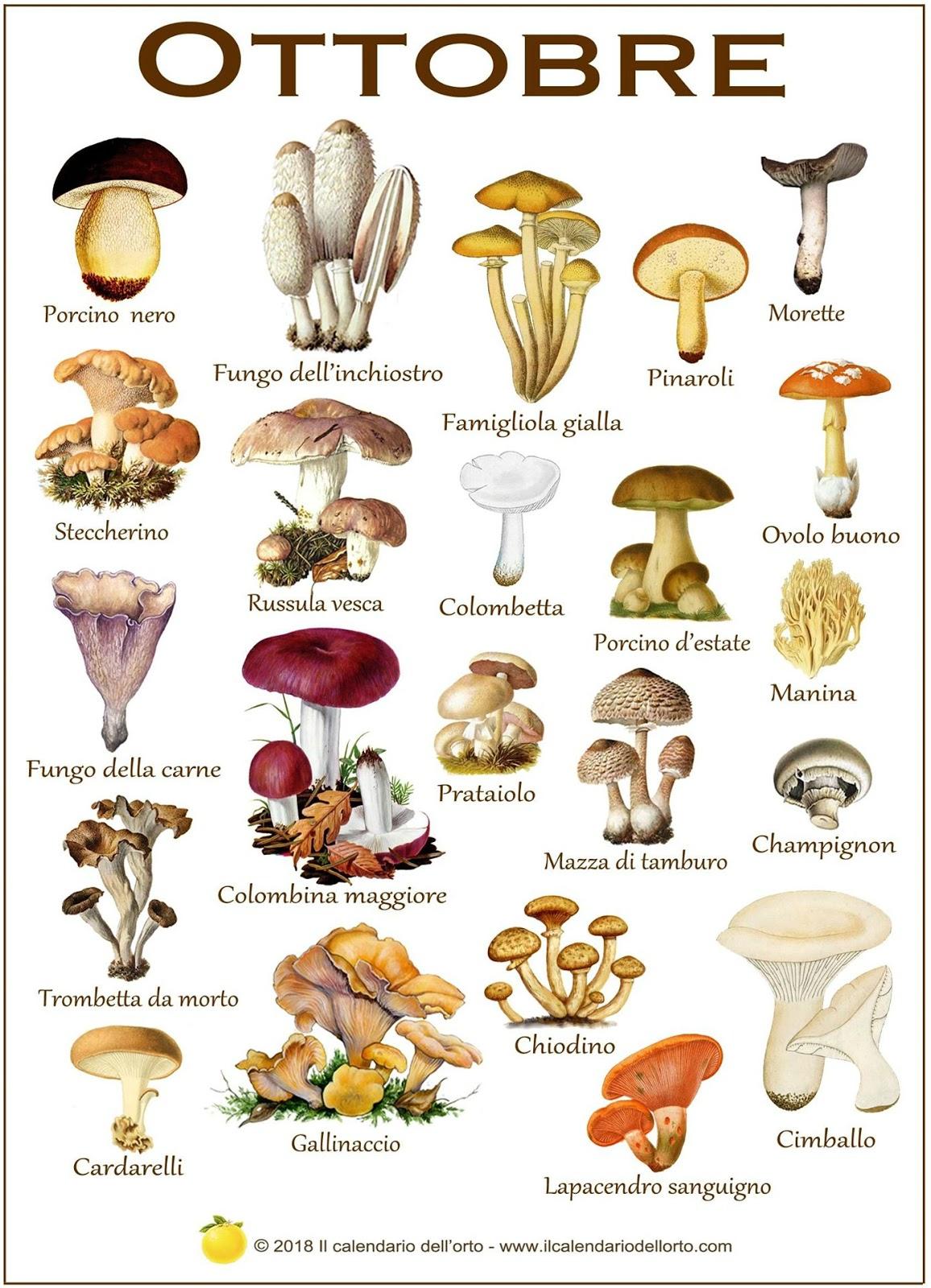 i funghi che si trovano a ottobre