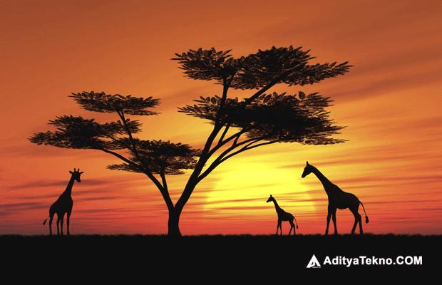 Fakta Menarik Benua Afrika yang menakjubkan