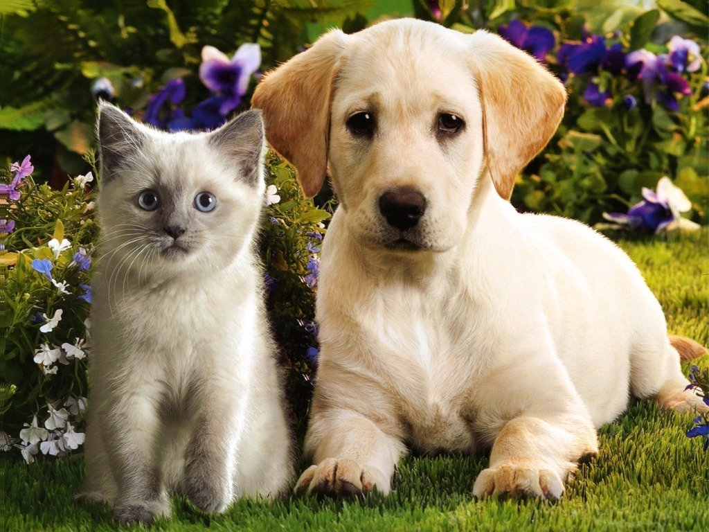 funny puppies and kittens - photo #19