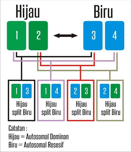 METODE PEWARISAN SIFAT RECESSIVE PADA LOVEBIRD