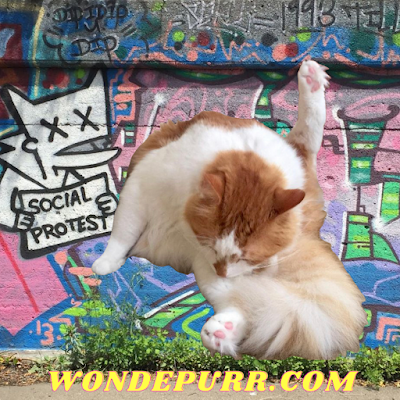 https://www.wonderpurr.com