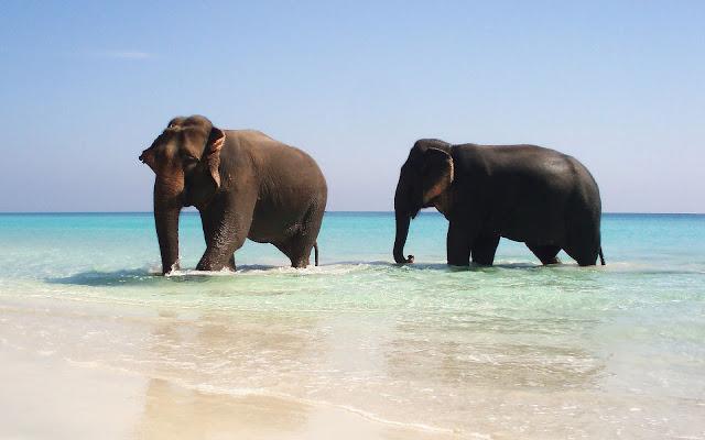 Olifanten op het strand in zee
