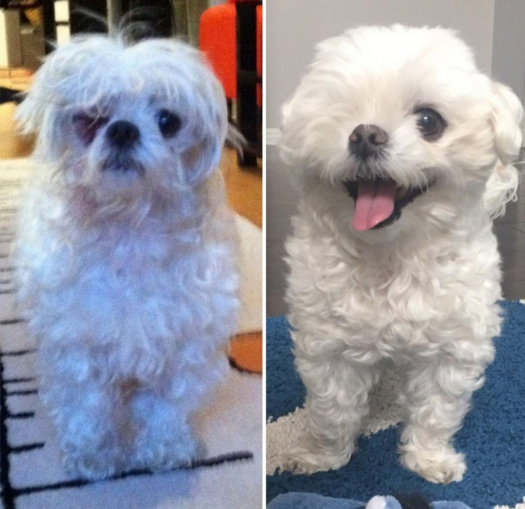 15 фото собак до и после взятия из приюта