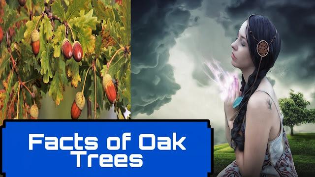 Facts about Oak Trees | ओक के पेड़ के बारे में रोचक तथ्य