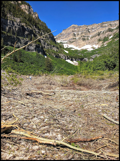 Avalanche Route Destruction with 2 Waterfalls in View above.