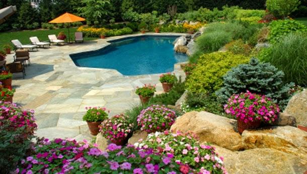 P tio das flores flores para piscinas for Arbustos para patios