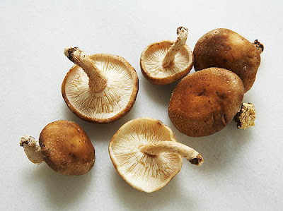 Mushroom Supplier Company in Siliguri
