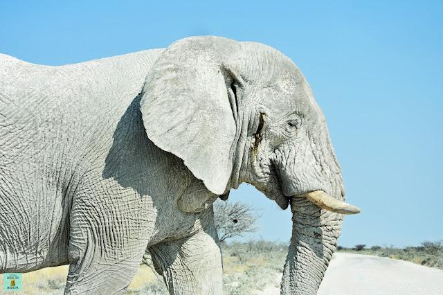 Elefante en Etosha, Namibia