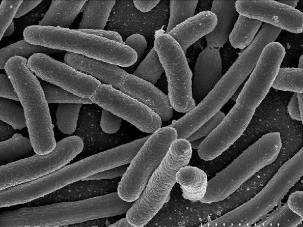 Bacterial growth on car door handle, Corona Virus, covid-19, disinfect Your Car To Fight Corona virus