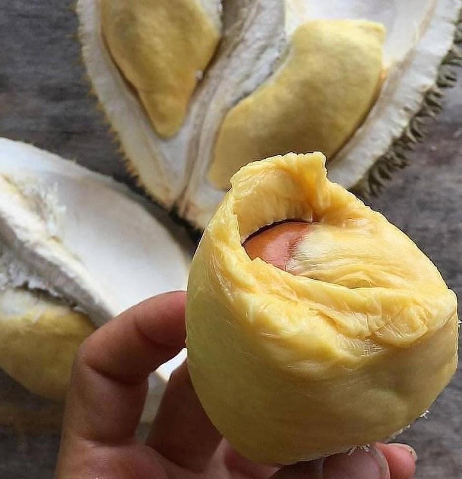 Bibit Durian Musangking Kaki 3 Nusa Tenggara Timur