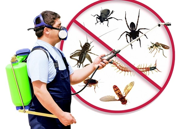 office pest control remove bugs birds rodent removal