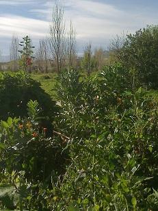 bosque comestible de santa margarita