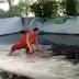 Veja o que aconteceu com adestrador de animais que resolveu botar a cabeça na boca de crocodilo