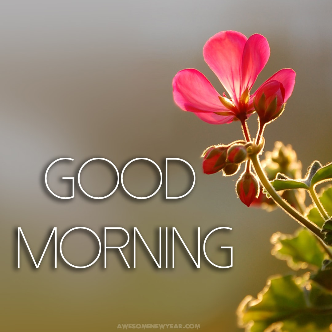 Gud Morning Images With Flowers