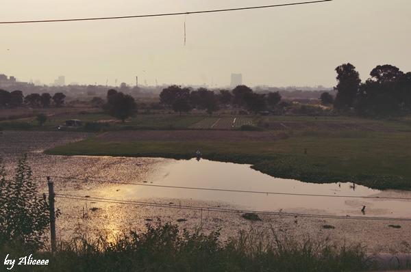 apus-in-New-Delhi
