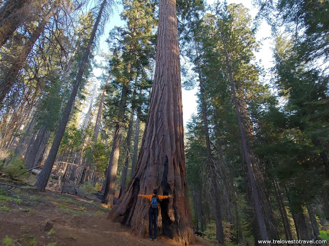 Tuolumne Grove Trail