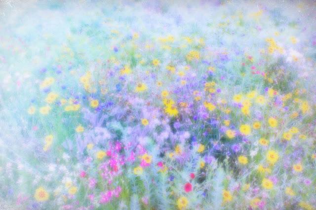 wildflowers dulwich