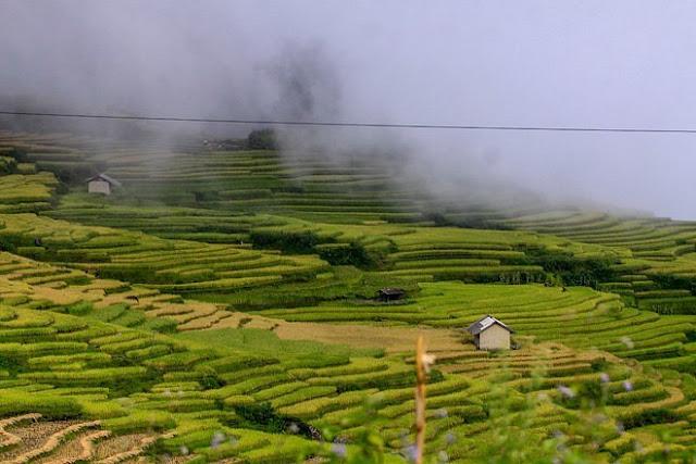 Ngắm cảnh sắc 'thiên đường' ruộng bậc thang hùng vĩ ở Y Tý Lào Cai 8