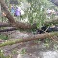 Pengendara Motor Asal Dasan Agung Tewas Tertimpa Pohon Tumbang di Batukliang
