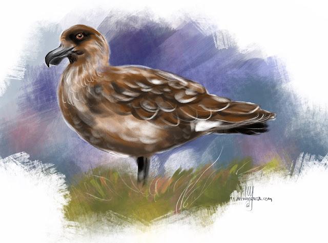 Great skua bird painting by Artmagenta