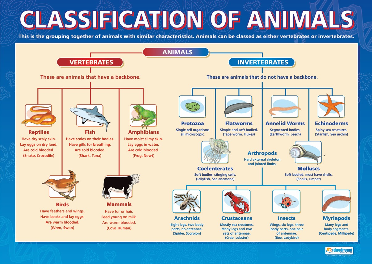 This Is Nadin S Page Classification Of Animals