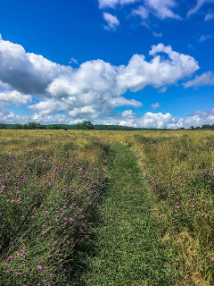 The meadow path lined with wildflowers