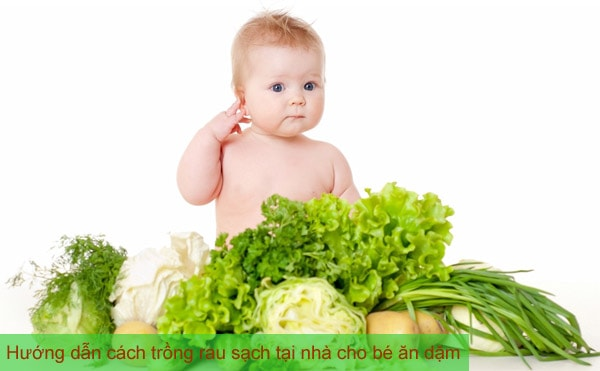 Top 10 thực phẩm tăng cường phát triển trí não cho bé