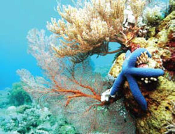 Biota Laut Wakatobi