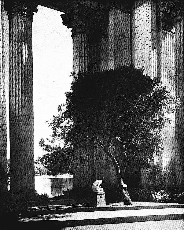 1915 Panama Exposition tree, a photograph