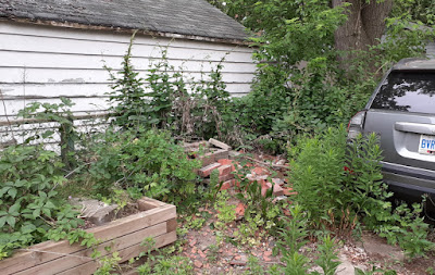Toronto Backyard Summer Garden Cleanup in East York Before by Paul Jung Gardening Services--a Toronto Organic Gardening Company
