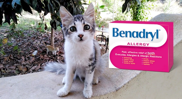 How Much Benadryl to Give Your Cat