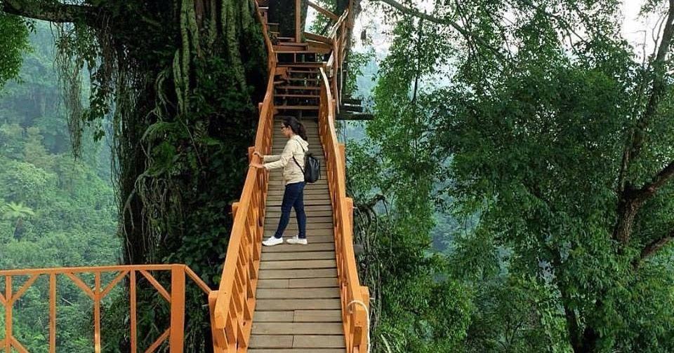 Lokasi Dan Rute Rumah Pohon Curug Ciherang Wisata Bogor Yang Unik