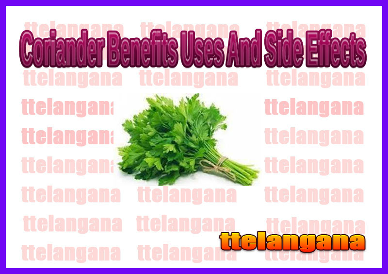 Coriander Benefits Uses And Side Effects