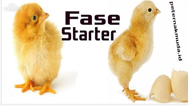 Tahap Starter Ternak Ayam