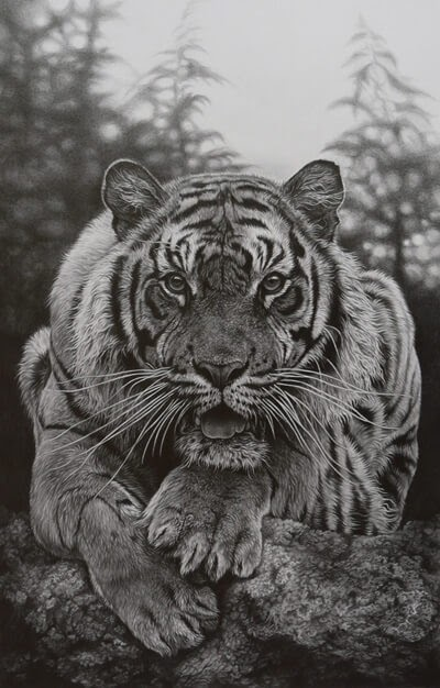06-Crouching-Tiger-Julie-Rhodes-Wildlife-Animals-Realistic-Pencil-Drawings-www-designstack-co