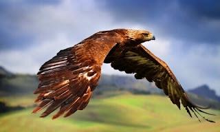 Sonhar com águia presa