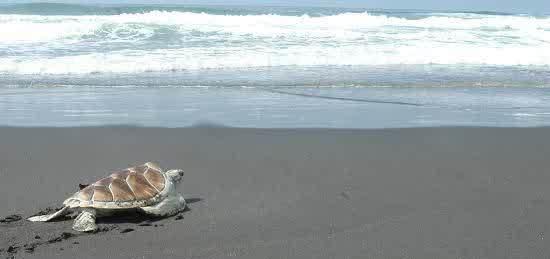 Pantai sindangkerta tempat wisata di tasikmalaya