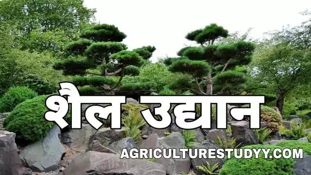 शैल उद्यान क्या है इसके लिए उपयुक्त पौधे एवं शैल उद्यान की निर्माण विधि, rock garden in hindi, शैलीय क्या होती है, rockery in hindi, शैलीय उद्यान पौधे