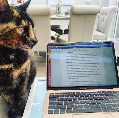 Writer Hannah Gold's tortoiseshell cat sitting next to her open laptop. The Writer's Pet on Hannah Gold and The Last Bear