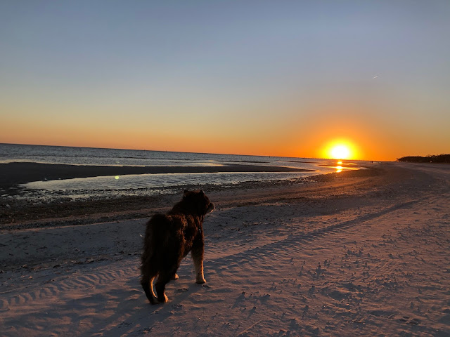 dog on beach in sunset