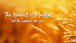 Catholic Daily Reading + Reflection: 26 January 2021 - The Harvest Is Plentiful, But The Laborers Are Few