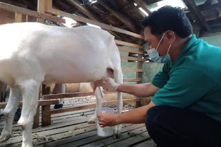 ✓ 11 Important Benefits And Side Effects Of Goat's Milk For Health