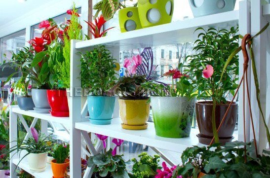 Here are some decent crops in your home