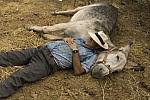 Tapas y siesta: combinación perfecta
