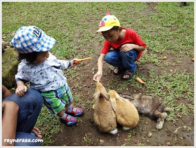memberi makan kelinci