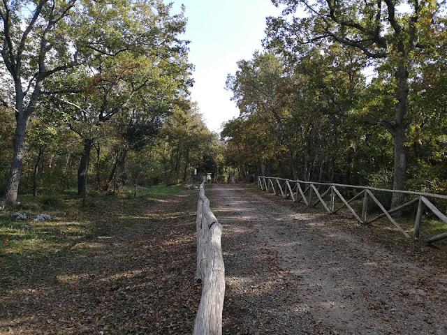 Sentiero nel bosco di Mottola