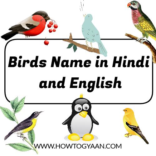 birds name in Hindi, birds name in English, birds name, all birds name, birds name list,